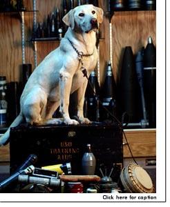 USAFbombdog