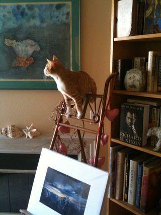 Oliver_climbing