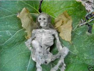 Dead_fairy