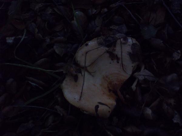 Giant_rain_mushroom_2