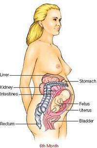 Ama_women_pregnancyandfertlity_lev2
